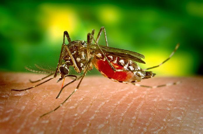 Co stosować na ukąszenia komarów? Poznaj domowe i apteczne środki łagodzące!