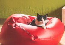 Kilka porad odnośnie odżywiania kotów